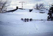Buffalo Blizzard
