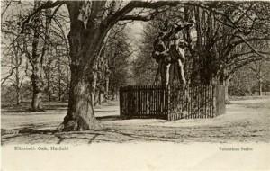 Queen Elizabeth's Oak 1893